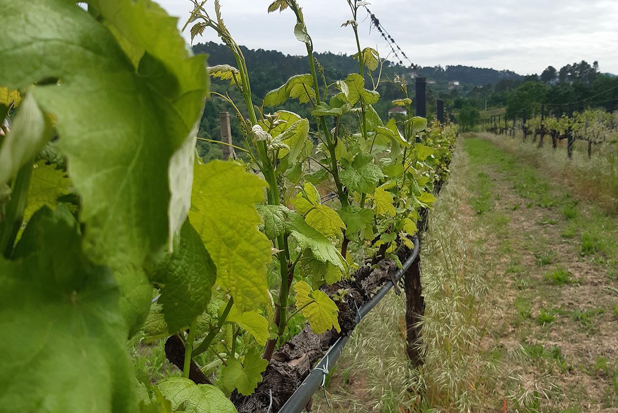 https://www.tua.wine/imagens/102/ajts-05.jpg