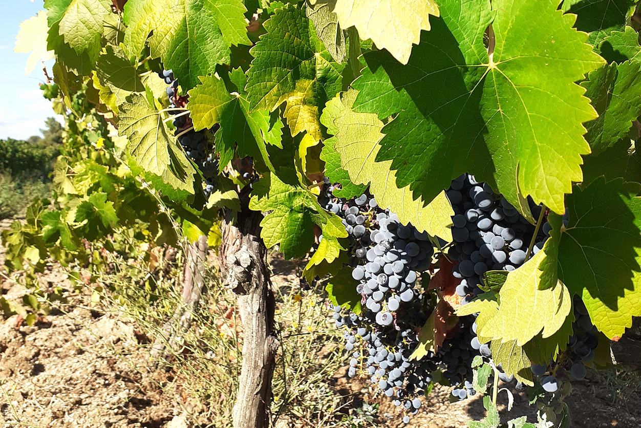 https://www.tua.wine/imagens/114/termos-07.jpg