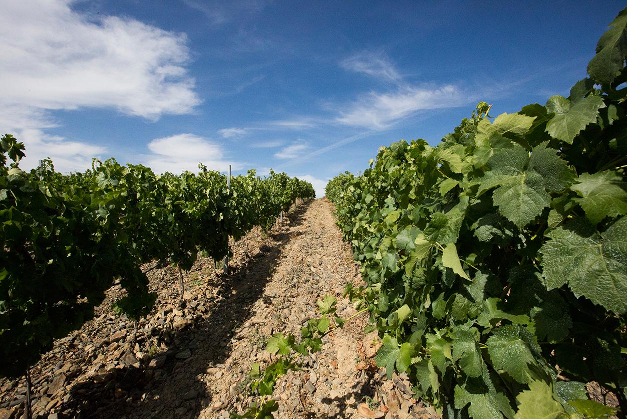 https://www.tua.wine/imagens/13/Quinta-dos-Castelares_final_03.jpg