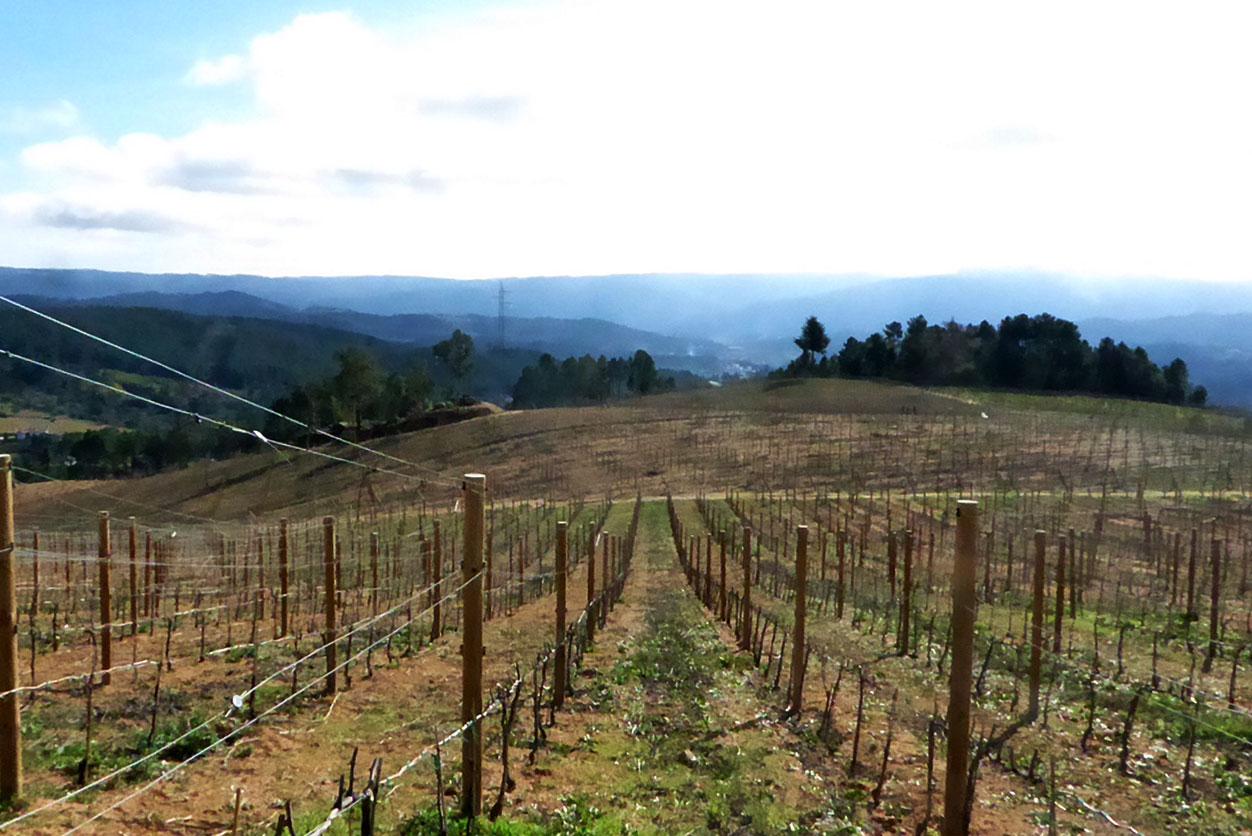Os vinhos bonitos da Quinta de Arcossó