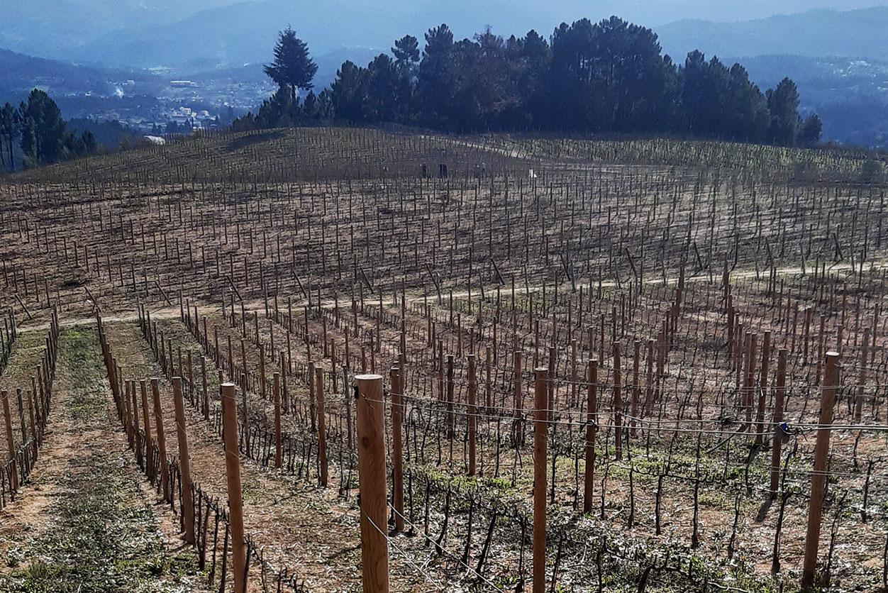 https://www.tua.wine/imagens/13/arcosso04.jpg