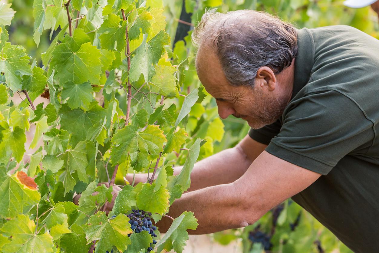 https://www.tua.wine/imagens/13/isaac02.jpg